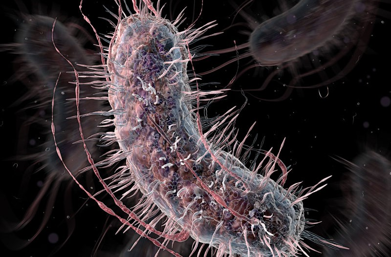 Genetically engineered probiotics detect cancer from urine